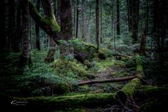 苔の森 2
