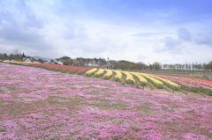 高原の春彩 4