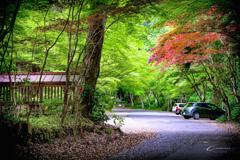 新緑の大矢田神社 Ⅸ