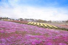 春色の高原 5