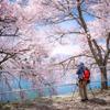 桜とカメラマン
