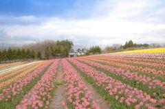 高原の春彩 2