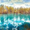 金秋の青い池