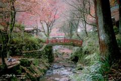 晩秋の横蔵寺 10