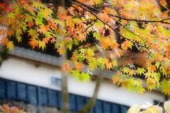 秋の横蔵寺 3