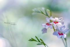 Flower in my garden Ⅹ