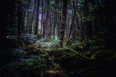 苔の森 1