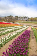 春色の高原 3