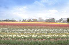 高原の春彩 3