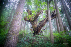21世紀の森 2019-4