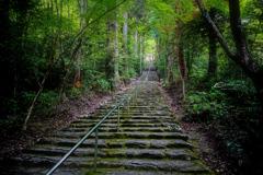 新緑の大矢田神社 Ⅴ