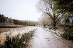 水仙の咲く小径 - 追憶