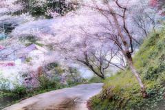 四季桜 2020-3