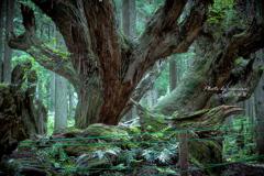 神秘の森 Ⅳ
