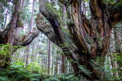 21世紀の森 2019-5