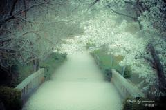 春の明治村 3