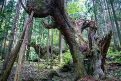 神秘の森 Ⅺ