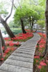 彼岸花の咲く小路