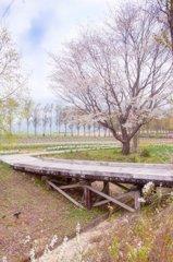 春色の高原 8