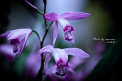 Flower in my garden Ⅷ
