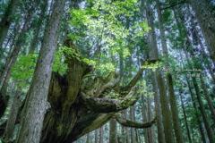 神秘の森 XIX