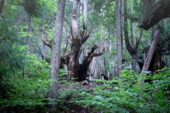 21世紀の森 2019