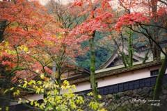 晩秋の横蔵寺 2