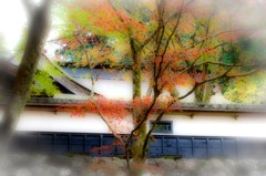 秋の横蔵寺 2