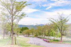 高原の散歩道
