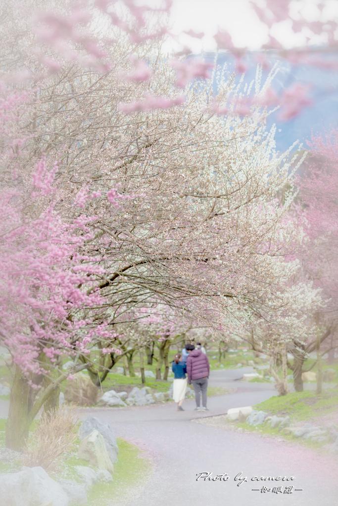 春色の小路