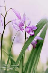 Flower in my garden Ⅶ