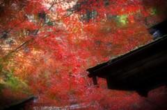 秋の横蔵寺 4
