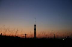 江戸川からの夕暮れ