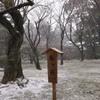雪中の兼六園4