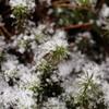 雪中の兼六園3