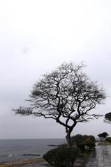曇り空の観音崎