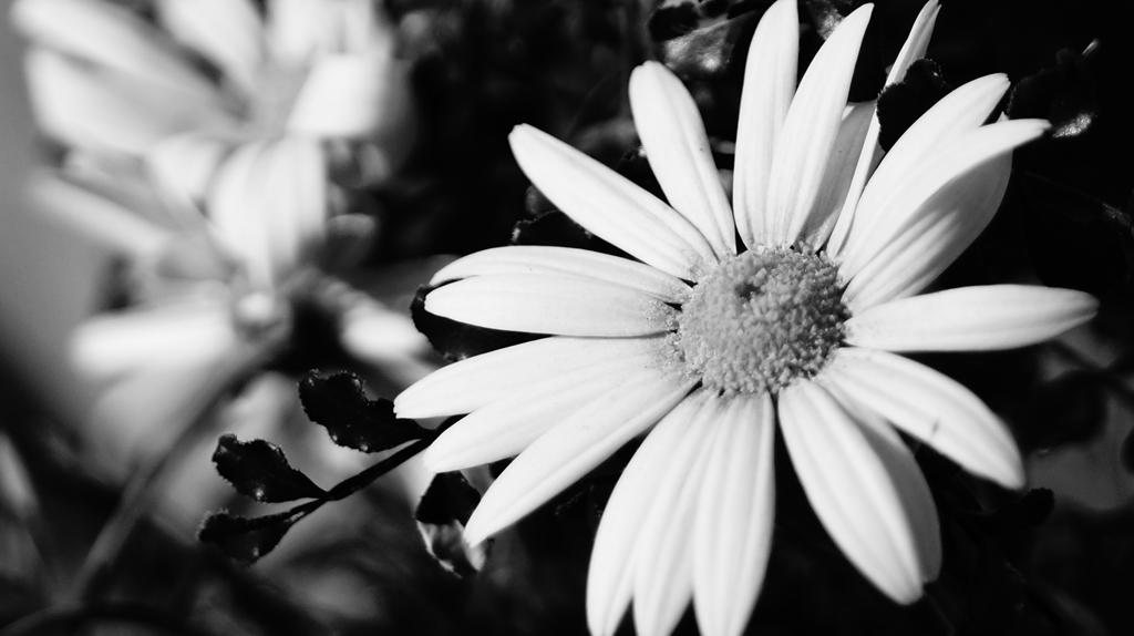 陽を浴びて咲く花