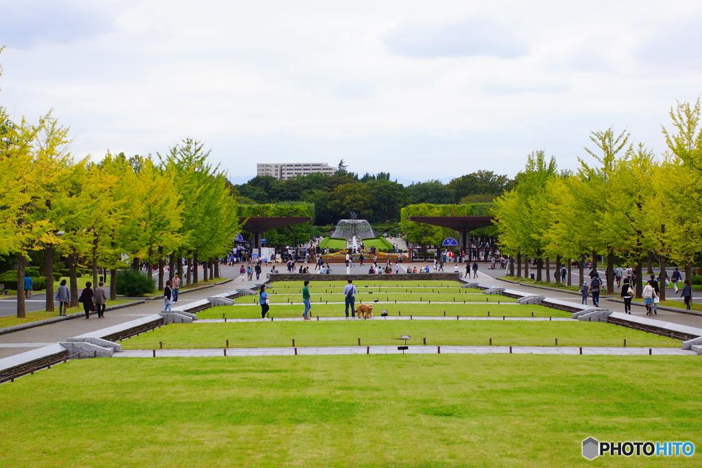 色づき始めた、立川・昭和記念公園