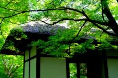 新緑に燃ゆる山門(2) ギャラリー用
