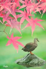 紅葉の秋に何思う。。