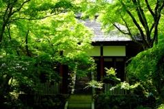 新緑に燃ゆる山門(1)