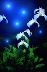 花の精が舞う夜