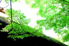 新緑に燃ゆる山門(3) ギャラリー用