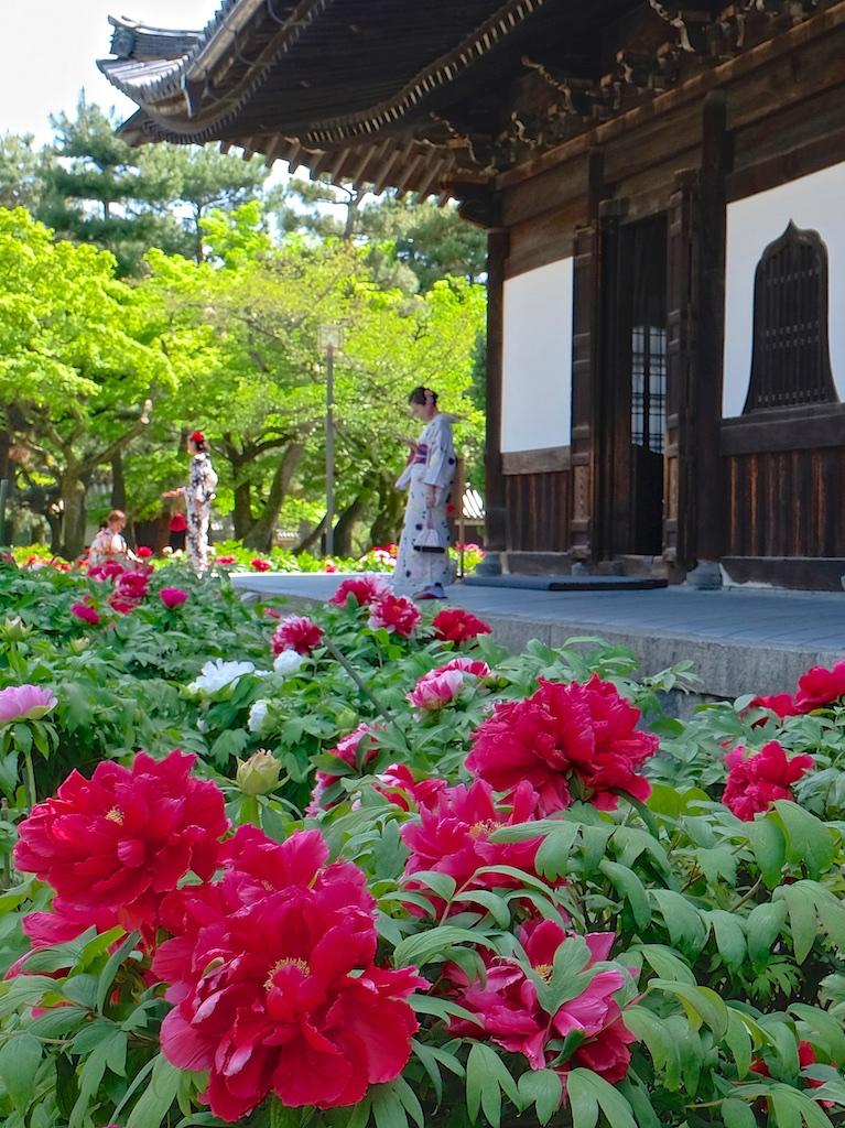 紅い牡丹の咲く寺で。。