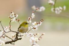 穏やかな春