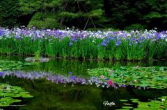 水辺の花景色