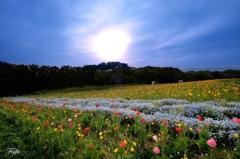 夕暮れの花の丘