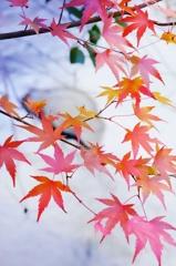 川辺にも秋の訪れ