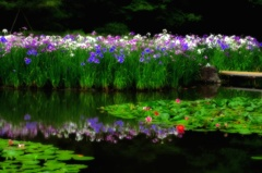 初夏の水辺の花