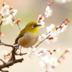 春を呼ぶ鳥